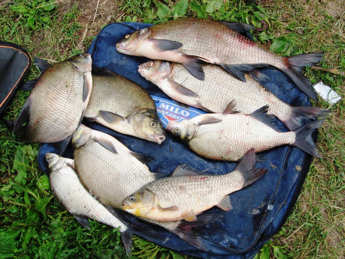 рыбалка на леща летом и осенью видео