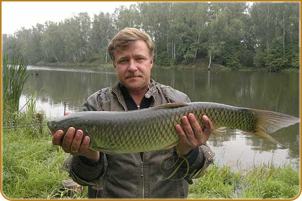 подкормка для рыбалки в домашних условиях