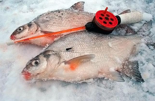 комбикорм как прикормка для рыб