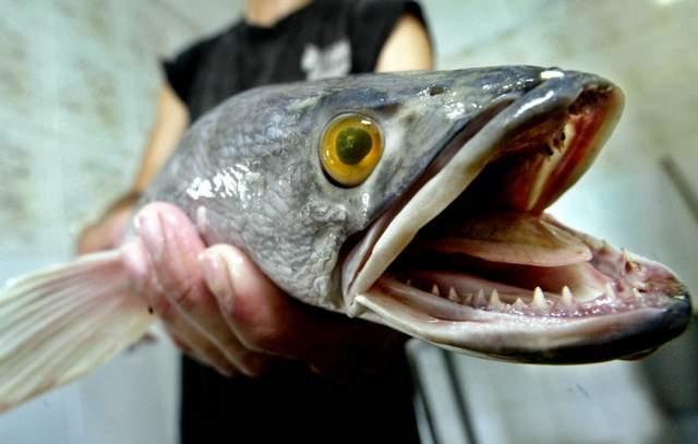 прикормки для рыбалки своими руками