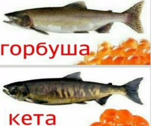 рыбы и икра