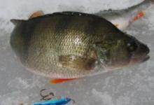 Зимняя рыбалка на Оке