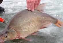 Ловля леща зимой на озере
