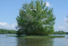 Платная рыбалка в Ростовской области