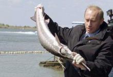 Путин стерлядь