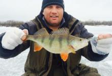рыбак с пойманным окунем на зимней рыбалке