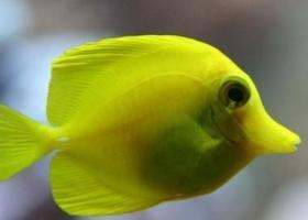 повадки рыбы