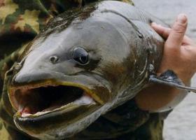 рыбалка в приморье
