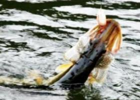 Ловля щуки летом на озере