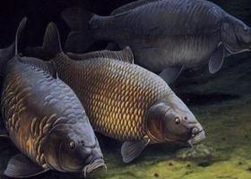 Рыбалка на макушатник видео