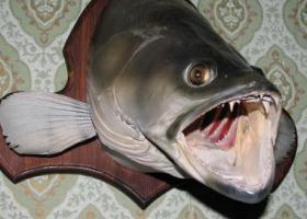 Как сделать чучело рыбы