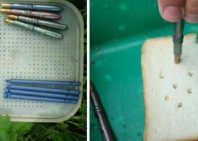 Ловля на хлеб