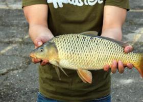сазан в руках рыболова