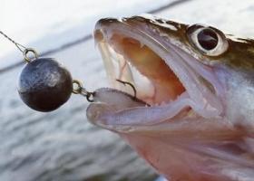 рыба пойманная на поролоновую рыбку