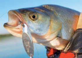 рыба кастмастер
