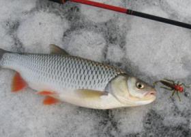 рыбка на льду