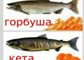 рыба и икра