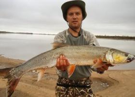 рыбак с желтощёком