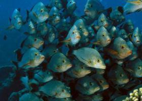 миграция рыбы