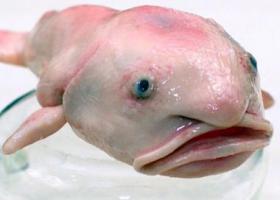 необычные рыбы
