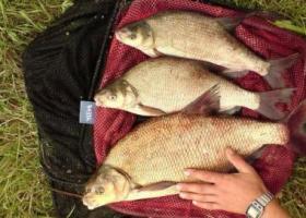 рыбалка в августе на Оке