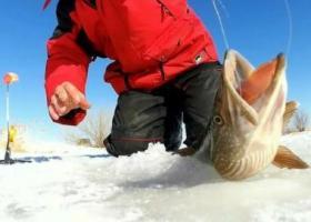 ловля щуки со льда