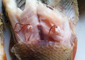 Паразиты в рыбе (фото)