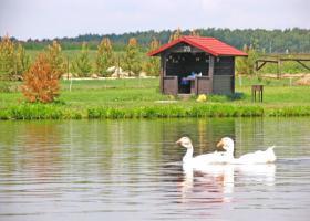 Золотой сазан фото водоемов