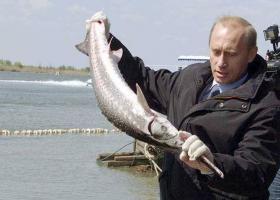 Путин держит стерлядь