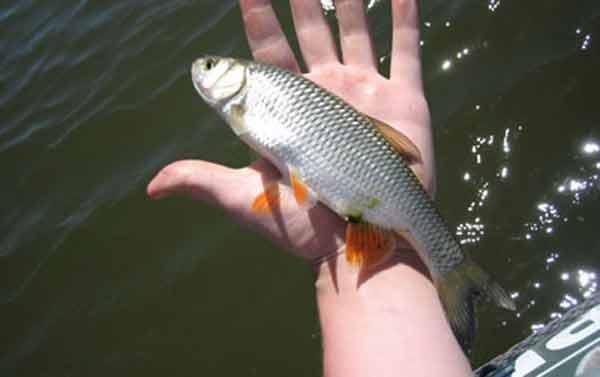 прогноз клева рыбы на день