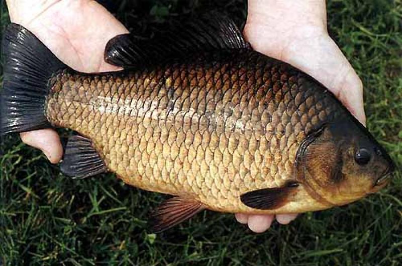 прикормка для рыбы в августе