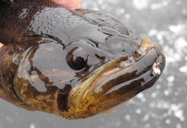 прикормка для рыбы состав